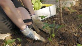Lavoro femminile in giardino stock footage