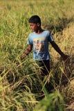 Lavoro indiano del ragazzo dell'agricoltore Immagini Stock Libere da Diritti