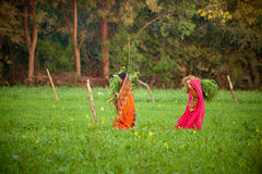 Lavoro indiano delle donne a terreno coltivabile fotografia stock libera da diritti