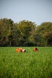 Lavoro indiano delle donne a terreno coltivabile immagine stock