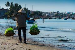 Lavoro locale del ot delle donne nella spiaggia lunga di Hai Fotografia Stock