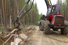 Lavoro a macchina della mietitrice in una foresta, tagliante i giovani pini a pezzi Industria del legno immagine stock libera da diritti