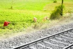 Lavoro manuale dell'azienda agricola India Immagine Stock