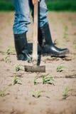 Lavoro manuale nell'agricoltura Immagine Stock