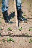 Lavoro manuale nell'agricoltura Immagine Stock Libera da Diritti