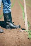 Lavoro manuale nell'agricoltura Fotografia Stock Libera da Diritti