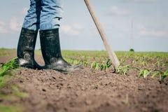 Lavoro manuale nell'agricoltura Fotografie Stock Libere da Diritti