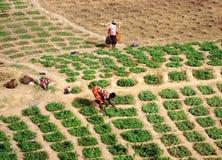 Lavoro nei campi - Ghana Fotografia Stock