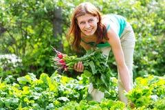 Lavoro nel giardino la donna raccoglie il raccolto del ravanello Immagini Stock