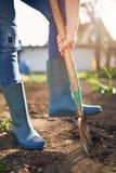 Lavoro in un giardino - il suolo di scavatura della primavera con Spading si biforca Immagini Stock Libere da Diritti