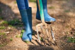 Lavoro in un giardino - il suolo di scavatura della primavera con Spading si biforca Immagine Stock Libera da Diritti