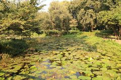 Lily Pond in Law Gardens. Law Garden is a public garden in the city of Ahmedabad, India. The market outside the garden is very famous for the handicraft goods stock images