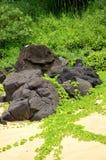 Law skały i cewienia Tropikalny ulistnienie, sekret plaża, Kauapea, Kauai, Hawaje, usa obrazy stock