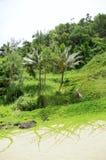 Law skały i cewienia Tropikalny ulistnienie, sekret plaża, Kauapea, Kauai, Hawaje, usa zdjęcia stock