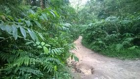 lawachara国家公园孟加拉国 图库摄影