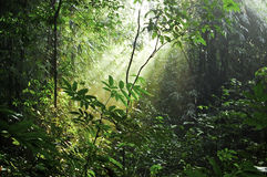 Lawachara Reserve Forest Stock Photo