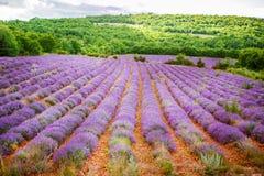 Lawend pola blisko Valensole w Provence, Francja Obrazy Stock