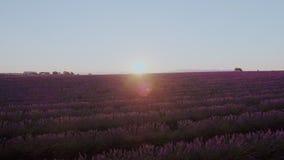 Lawend pola na wschód słońca lub zmierzchu zdjęcie wideo