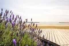 Lawenda i morze śródziemnomorskie Zdjęcie Royalty Free