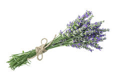 Lawenda kwiaty odizolowywający na białym tle Zdjęcia Royalty Free