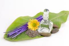 Lawenda (Lavandula angustifolia (Zjednoczone Królestwo). Zdjęcia Stock