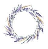 Lawendowa akwareli ręka malował wianku pszenicznego zboża Provence obrazy stock