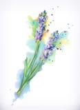 Lawendowi kwiaty, akwarela obraz ilustracji