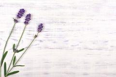 Lawendowi kwiaty na białym drewno stołu tle Fotografia Stock