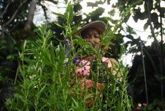 LAWENDOWY ANTY komar rośliny sprzedawca Zdjęcia Stock