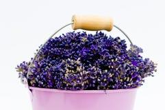 Lawendowy kwiat w purpury wiadrze obraz stock
