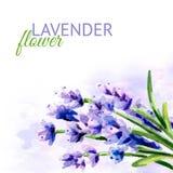 Lawendowy kwiatu tło Akwareli ręka rysująca ilustracja, odizolowywająca na białym tle Zdjęcia Royalty Free