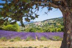 Lawendowy Provence Francja Obraz Royalty Free