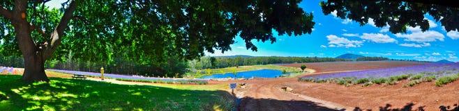 Lawendy gospodarstwa rolnego krajobraz zdjęcia royalty free