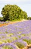 Lawendy pole, Provence Obraz Royalty Free