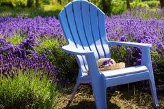 Lawendy purpurowy Pole Fotografia Stock