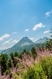 lawinowej przerwy nakrętki lewy góra przygotowywał dobrze cień błyszczącego skłonu śniegu szczyt target1813_0_ Obrazy Royalty Free