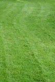 Lawn. Just mowed vivid green lawn royalty free stock photos