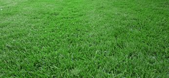Lawn. Dark green mowed lawn in summertime Stock Images