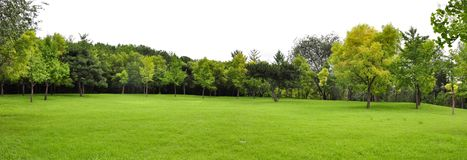 Free Lawn Royalty Free Stock Photo - 124705335