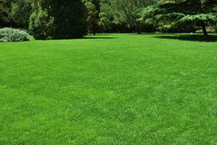 Lawn. Background in a park Royalty Free Stock Images