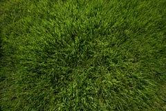 lawn Arkivbilder