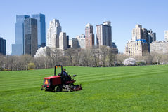 Lawn in Central Park  Royalty Free Stock Photo