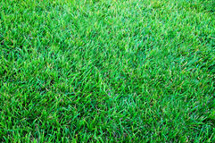 Lawn. Green grass lawn during the summer Stock Images