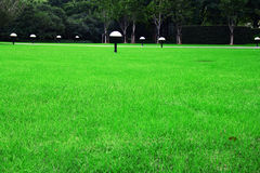 A lawn. Of City Square Royalty Free Stock Photos