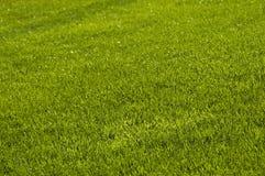 Lawn Stock Photos