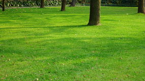 Lawn. Leaves in the lawn at the afternoon.It\'s a very beautiful view Royalty Free Stock Photos