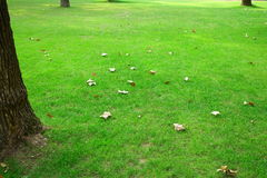 Lawn. Leaves on the lawn in a park.It\\\'s a very beautiful view Stock Photo