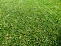 Lawn. royaltyfria foton
