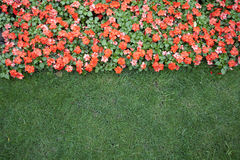 Lawn. And flowers in the garden Royalty Free Stock Photo