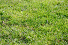 Lawn Royalty Free Stock Photography